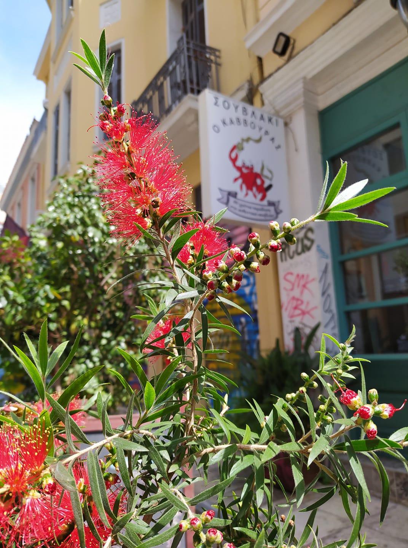 «Ο Κάββουρας»: Το top σουβλάκι της Αθήνας που πρέπει να αναλύψεις